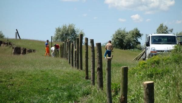 Montare gard temporar protectie plantatie - Socol