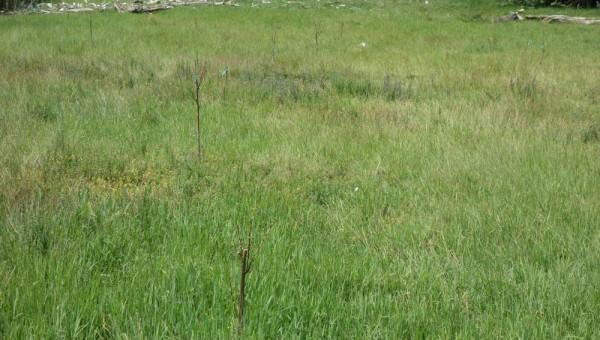 Sade reintrate in vegetatie in zona protejata de gard